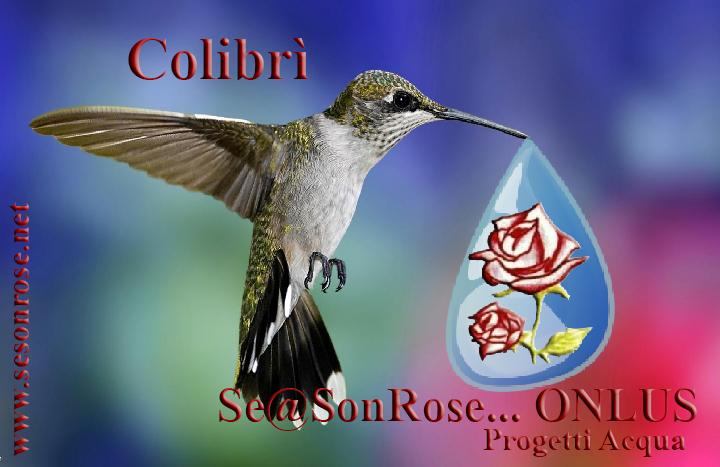progetto colibrì